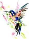 a43c15561fdcc2c73ff8175fc7051f96--hummingbird-tattoo-watercolor-hummingbird-painting